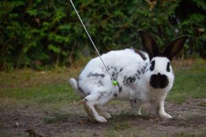 Bunnydance